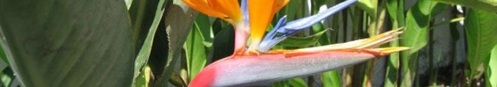 FLORA / PLANTS Page 3